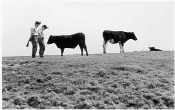 soldiers-and-bullocks-romney-marsh-1973